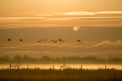 3-Intermediate-Open-4-Dan_Barnett-Sandhill_Cranes_North_Platte_Nebraska