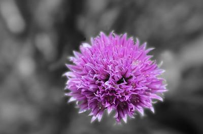 3-Intermediate-Altered_Reality-DNP-Barbara_Holdcroft-Purple_Explosion