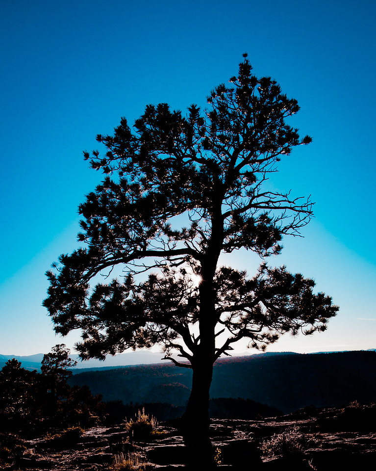 3-Intermediate-Assigned_-_Backlit_-_Main_light_source_is_behind_your_subjec-DNP-Larry_Hardwick-RED_CANYON_PINE