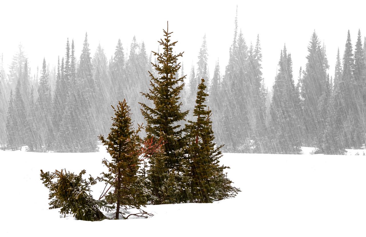5-Master-Open-3-Larry_Whittaker-Snowfall