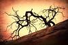 5-Master-Altered_Reality-1-Shayne_Shaw-Primal