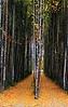 3-Intermediate-Open-DNP-Tim_Peterson-3-Intermediate-Open-Tim_Peterson_Portals_To_The_Forest