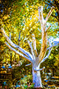 5-Master-Open-DNP-Brent_Howcroft-Sycamore_Yard_Art_-_Brent_Howcroft_-_master_-_Assigned