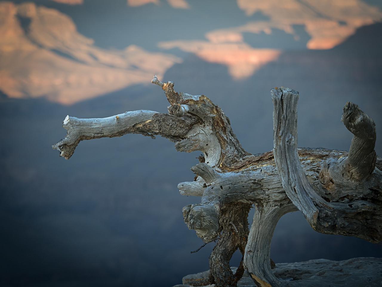3-Intermediate-Open-DNP-Hiroshi_Kamaya-Dragon_in_Grand_Canyon