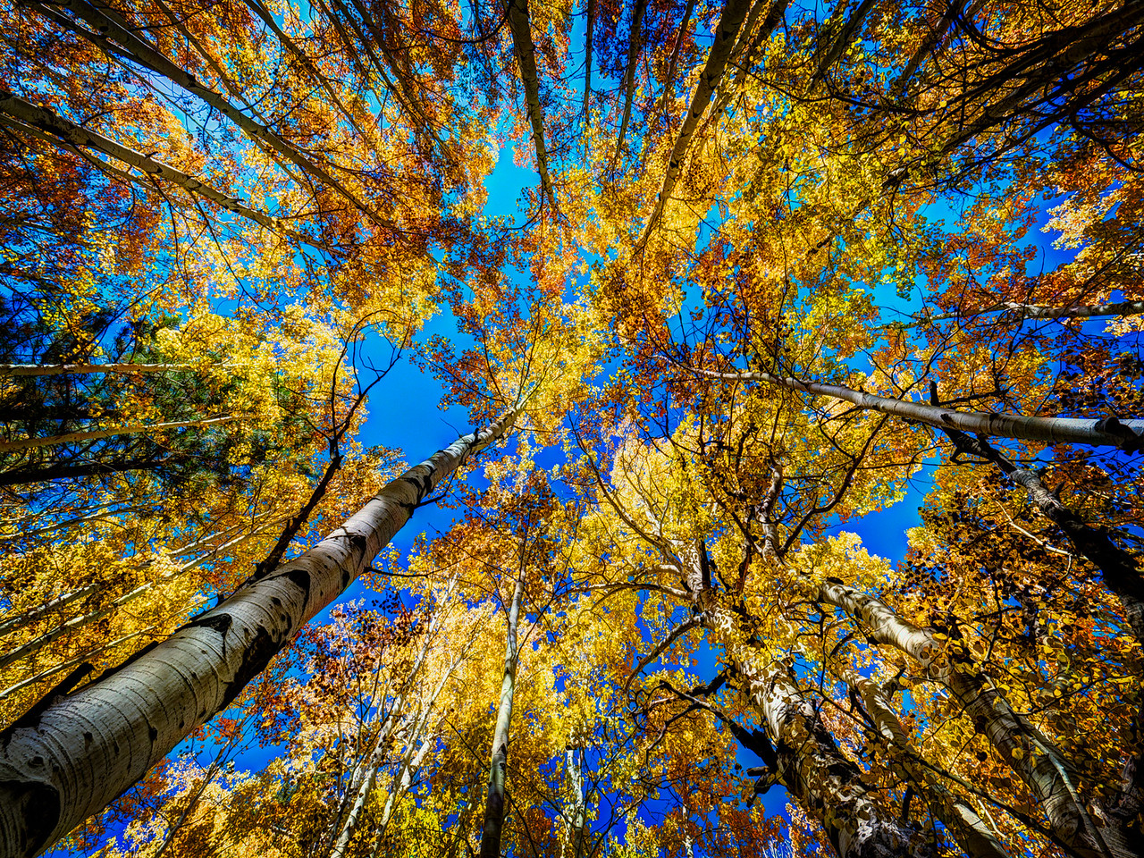 3-Intermediate-Open-DNP-Hiroshi_Kamaya-Aspen_trees