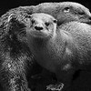 FILL-A-1st-Debra Regula-The Otter Couple
