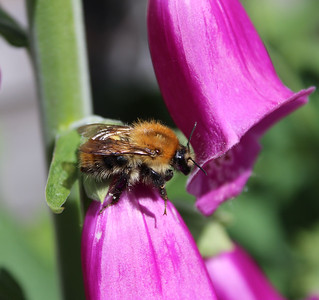 Taking a Bee-reather...