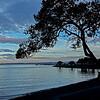 BACK-A-Bill Matthews-McNears Beach