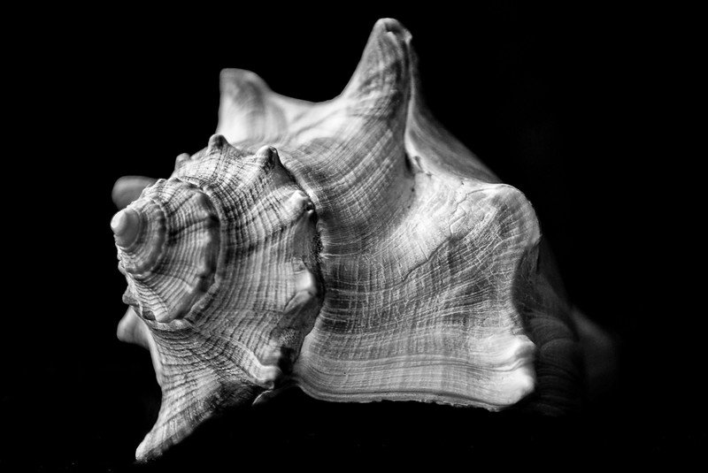 B&W-B-HM-Bonny Henderson-Spiral from the Sea
