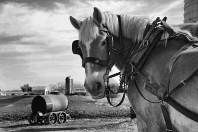 B&W-A-2nd-Lana Rebert-Work Horse