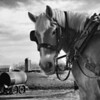 B&W-A-2nd-Lana Rebert-Work Horse