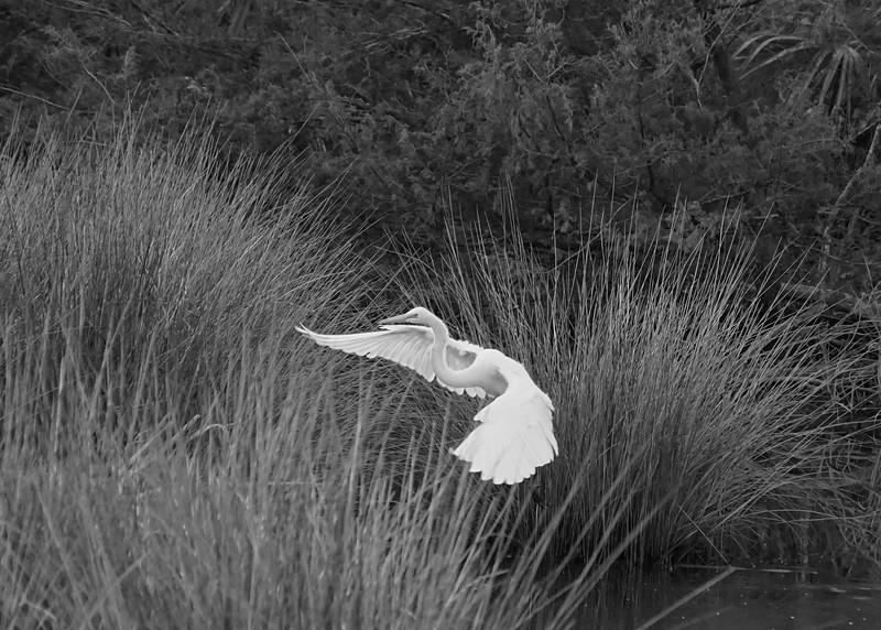 B&W-B-2nd-Jim Jameson-Pretty Bird