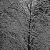 B&W-B-Chuck Kersey-Freezing Rain