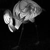 B&W-B-Susan Capstick-Flamingo