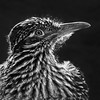 B&W-A-Debra Regula-Road Runner Suncatcher