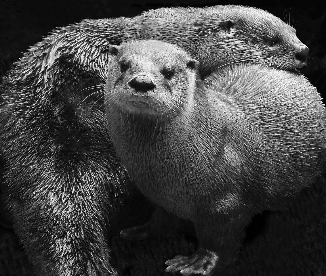 FILL-A-1st-Debra Regula-The Otter Couple
