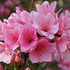 FILL-B-Chuck Kersey-Spring Blooms