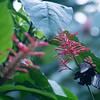 FILL-B-Tom Fagan-Butterfly Breakfast