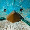 FILL-B-Judy Nappi-BLUEBOY!!