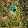 FILL-B-Teresa Bruni-Nature's Paisley
