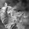 OPEN-A-HM-Brenda Hiscott-Nature's Beauty