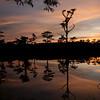 OPEN-A-Don Hiscott-Cypress Pond