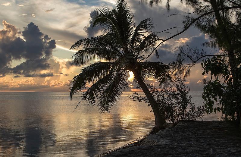 OPEN-A-Gary Magee-French Polynesian Delight