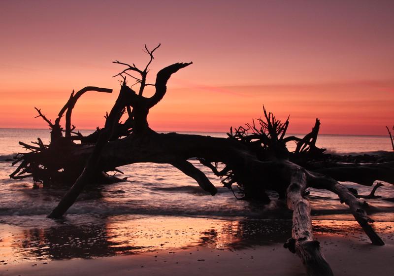 OPEN-A-Marti Derleth-Beach Silhouette