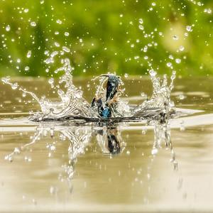 kingfisher catch