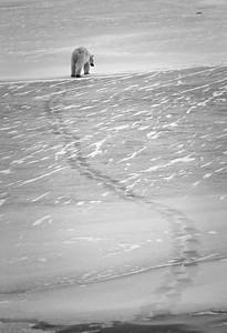 Walking Across the Ice