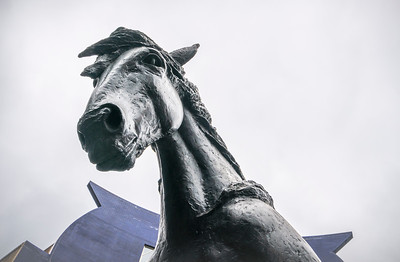 JACOB, The Circle Bray Horse