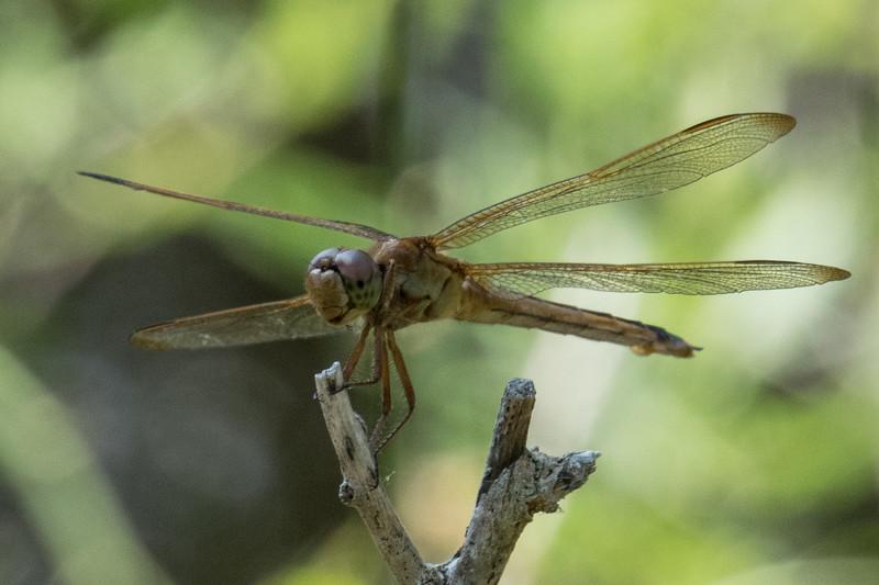 SEL-B-Mike Stevens-Dragonfly
