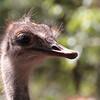 SEL-A-Marti Derleth-Ostrich Eyes