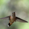 SEL-A-Diane McCall-Hummer in Flight