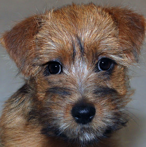 EYE-A-HM-Debra Regula-Puppy Peeper