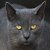 EYE-C-2nd-Donna Ford-Cats Eyes