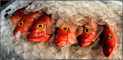 EYE-C-1st-Neva Scheve-A Fisheye of Fish Eyes
