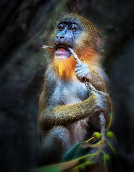 5-Master-Open-3-Anna_Day-Primate_Portrait
