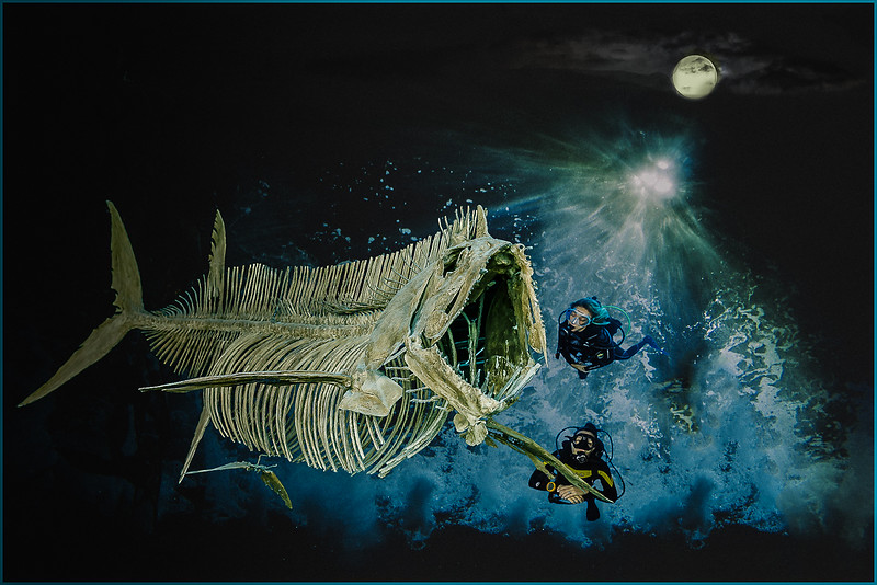 Moon Night Fish Wrack Diving