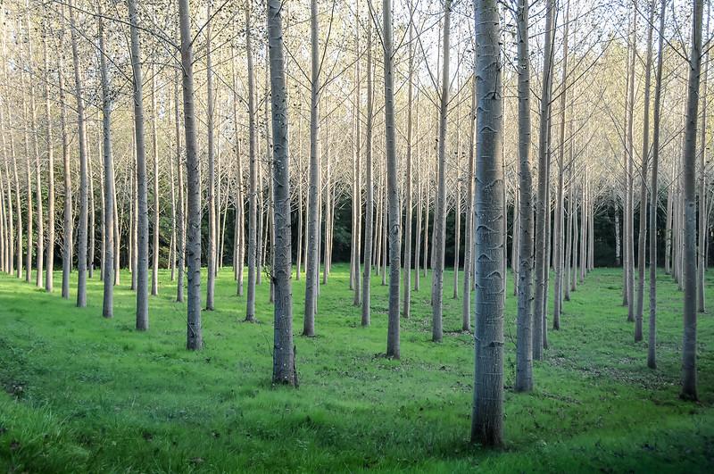 Trees in Dordogne 2