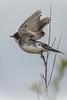 King Bird takes Flight