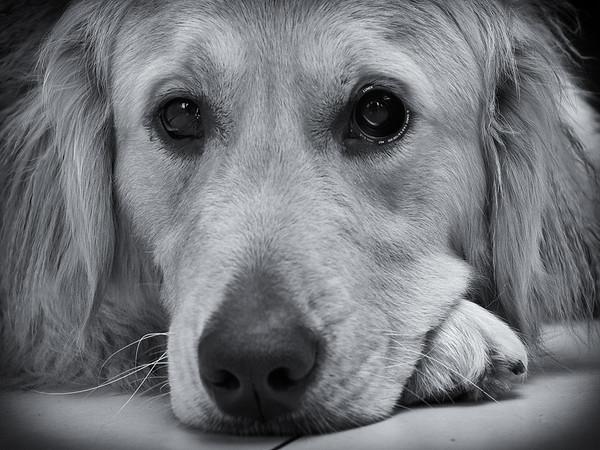 Sight Dog