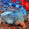 OPEN-A-Chuck Kersey-Pet Iguana