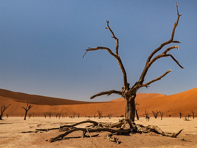 Deadvlei, Namibia5