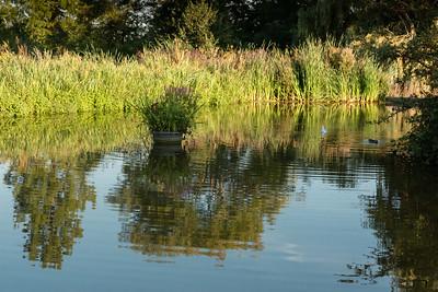 Oakwood Park Reflections