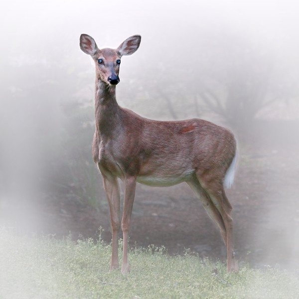 Wild-C-3rd-Grace Hill-Out of the Fog