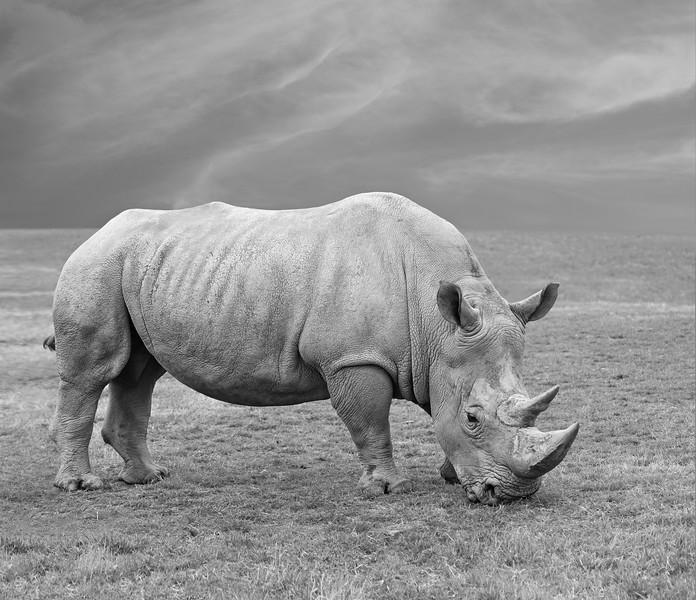 Wild-C-1st-Donna Ford-Rhino