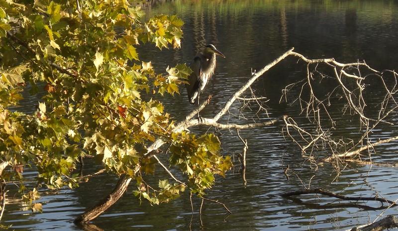 Wild-B-Robert Westrick-Bird Resting