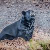 Wild-C-Wendell Dance-Black Bear at Dare County