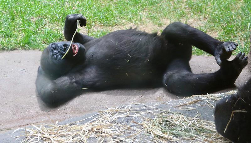 Wild-B-Jerry Kozel-Lazy Day